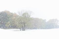雪地 (TKBou) Tags: japan tokyo snow 日本 東京 雪 初雪 風景 scenery photographer フォトグラファー instagood instalike like4like 写真好きな人と繋がりたい ファインダー越しの私の世界 d700 nikon