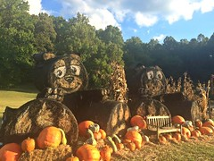 ~ Bear Tracks , Bear Tracks, A Comin' After Me .... (~ Cindy~) Tags: haybales autumndecor pumpkins gourds decorations fall townsend tennessee 2016 hbm