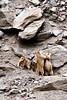 IMG_0224 (Archna Singh Photography and Design Studio) Tags: canon ladakh zanskar jammukashmir khardungla rohtang tsokar india nature tropicaldesert buddhism