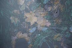 301/366 (Niko Saarinen) Tags: doubleexposure tripleexposure art layers autumn fall syys syksy birds tuusulanjrvi lake tuusula finland fujifilm xe2 fujinon35mm classicchrome