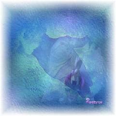 Tutto  vita (Poetyca) Tags: featured image sfumature poetiche poesia