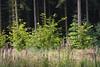 ckuchem-3539 (christine_kuchem) Tags: abholzung baum bienenweide blumen bäume fingerhut holzwirtschaft laubwald lichtung pflanzen spontanvegetation vegetation wald waldlichtung wildblumen wildpflanze wild