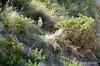 NZ 2873 - Nueva Zelanda - Peninsula Otago (Jano Escuer) Tags: nuevazelanda oceanía