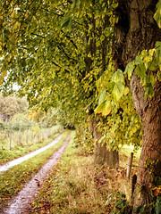 2016-10-22_12-13-15 (torstenbehrens) Tags: feldweg baum bäumen olympus epm1 digital camera on1 on1pic