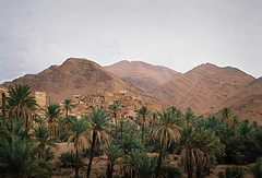 (louis de champs) Tags: minoltasrt101 mdrokkor45mm12 film kodak portra160 morocco atmansour gorges palmtrees mountains village abandonned