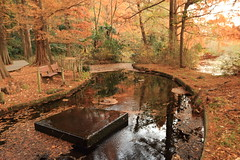 Late AutumnShakujii Park) (seiji2012) Tags:     reflection fountain shakujii metasequoia dawnredwood pond