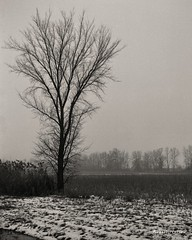 L'arbre au bord du champ... (Argentique) / The tree on the side of the field... (Film) (Pentax_clic) Tags: ciroflex model f ilford hp5 decembre 2016 argentique film nb bw robert warren vaudreuil quebec arbre tree champ field perceptol 13
