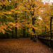 Autumn in the forest - HFF!