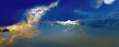 IMG_0952 Out of the storm II (Rodolfo Frino) Tags: sky cielo cloud clouds nube nubes nature natura bright gray grey yellow gull seagull gaviota colour color wow azul open opening ciel bird fauna pajaro raptor storm colors colours colorful colourful natur naturaleza gold golden birdinflight natureza exposure flight