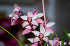 Orchidaceae (kevinfinetto) Tags: orchidaceae pentax group nature naturalist mothernature orchidea old onelove follow home nice aperture focal lenght lens