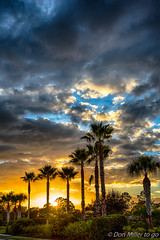 My Florida (DonMiller_ToGo) Tags: cloudporn palmtrees sunsetmadness hdrphotography nature goldenhour clouds hdr silhouettes 3xp millerville onawalk sun sky sunsetsniper outdoors d810 sunsets florida