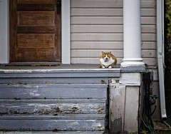Cat On A Weathered Porch (mjardeen) Tags: konicaar57mm14 hexanon konica ar 57mm 14 sony a7ii a7m2 tacoma wa washington cat house porch texture outdoors wood door steps on1 on1effects weathered