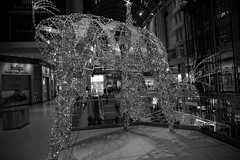 DSC06754 (Moodycamera Photography) Tags: cityoftoronto eatoncenter baywondows nighttime sony a6000 hdr blackandwhite downtown handheld dundassquare ttc cityhall nathanphillipssquare iceskating christmastree lights family aryanna norstrom