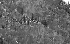 Living on the Edge (JL Outdoor Photography) Tags: trees rockface jaspernationalpark jasper alberta