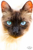 IMG_M5708 (Max Hendel) Tags: cat gato felino streetcat felie bichano animaldeestimação beautifulcat animaldoméstico canoneosdigital photobymaxhendel bymaxhendel photographedformaxhendel fotografadopormaxhendel maxhendel photographedbymaxhendel pormaxhendel canoneosphoto photographermaxhendel maxhendelphotography