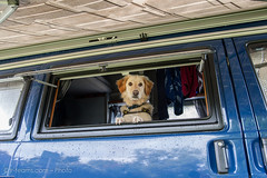 Walli (jr-teams.com - Photo) Tags: uk camping england dog chien pet window mix nikon retriever hund oxford nikkor camper haustier afs campervan hovawart 24120 campingbus vereinigtesknigreich d700 424120vrii