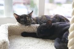 Sleeping through the rain (Getting Better Shots) Tags: cats pets animals furry kitties