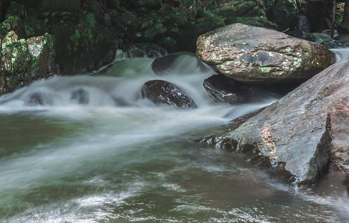 Feathery Mountain Stream.