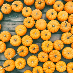 Pumpkins (B.C. Angell) Tags: autumn fall square pumpkins squareformat farmersmarkets unionsquaregreenmarket minipumpkins iphoneography instagramapp uploaded:by=instagram vscocam