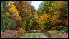 La promenade d'un dimanche (Guenever45) Tags: automne couleurs chemin fort fortdorlans