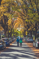 When you catch that perfect moment 💛 (Sonika Arora 604) Tags: street trees ladies girls friends canada fall cars nature colors beautiful leaves vancouver walking outdoors nikon women shadows bc natural britishcolumbia candid branches streetphotography naturallight center highlights tall westvancouver vancity naturephotography streetphotographer beautifulbc candidmoment nikonphotographer nikonphotography nikonphotographers fallinvancouver