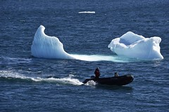 _DSC9221 (TC Yuen) Tags: glacier arctic greenland whales iceberg crusing floatingice polarregion greenlandeast