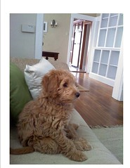 this-is-mollie-shillin-on-couch--shes-one-of-cupcake-and-chewys-girls_4460702771_o