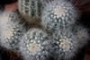 Inside the Arid House (alexispadilla) Tags: california travel cactus nature cacti garden berkeley bayarea arid succulents nopal nopales universityofcaliforniabotanicalgardenatberkeley