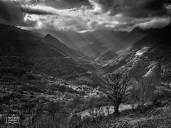 Contemplación/ Contemplation (Jose Antonio. 62) Tags: trees blackandwhite bw españa naturaleza blancoynegro nature beautiful clouds photography spain arboles asturias nubes pajares