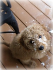 snow-dog--this-is-luna--shes-one-of-ginger-and-buddys-little-girls-_4329406310_o