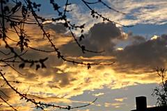 South window clouds   7:40:52am  St. Cloud, MN. (~nevikk~) Tags: clouds puffyclouds windowshot postsunrise reddishclouds