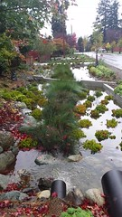 Rain runoff, water management in North Seattle with slow filtering, and holding tanks, Broadview, Seattle, Washington, USA (Wonderlane) Tags: 20161020114654 rainrunoff watermanagementinnorthseattlewithslowfiltering andholdingtanks broadview seattle washington usa