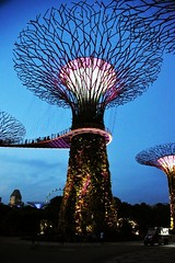Garden by The Bay...Singapore (Manoo Mistry ( On Holiday)) Tags: singapore garden by bay espelande tower nightscene night colour