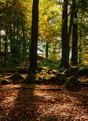 Golden clearing (milo42) Tags: peak district national park httpwwwchrisnewhamphotographycouk 2016 meetup chatsworth peakdistrictnationalpark peakdistrict derbyshiredalesdistrict england unitedkingdom gb