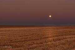 Vollmond / Full moon (Explored...thank you so much!) ♥ (Claudia Bacher Photography) Tags: vollmond fullmoon feld field stoppelfeld abendstimmung evening dämmerung himmel heaven outdoor schweiz suisse switzerland sonya7r