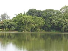 DSCN0340 (apacheizabel) Tags: lago pássaros árvores céu pinhas tronco espelho dágua queroquero rolinhas banco no bosque família de galinhas passeio parque centro aeroespacial da aeronáutica cta são josé dos campos sp