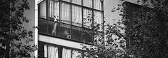 Watching the Street (elgunto) Tags: barcelona street window dog watching blackwhite bw sonya7 canonfd135 manuallense