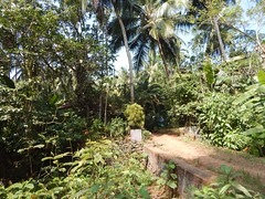 Villages Near Calicut Kerala Photography By CHINMAYA M (23)
