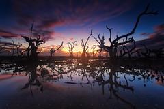 The Daybreak (Ralph Yabut) Tags: sunrise trees sea sky colors reflection singhray chasinglight philippines phottix landscape landscapephotography sun longexposure longexposurephotography clouds