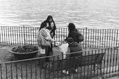 Un... lago di coccole! (sirio174 (anche su Lomography)) Tags: cane dog coccole carezze villaolmo lungolago lago lake lagodicomo comolake como