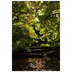 Ein Treppchen im Wald (Nikonfotografie) Tags: nikonofficials nikonlove nikon landscapephotography landscape landschaft bltter trees herbstliebe sonnenschein sunshine herbst wald niedersachsen meinnorden