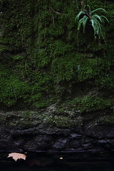 (Franois DR) Tags: canon eos 600d nature moss fern 50mm f18 niftyfifty