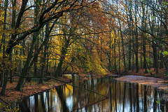 Autumn / Fall / Herfst / Automne (tribsa2) Tags: nederlandvandaag marculescueugendreamsoflightportal amsterdam amsterdamschebos autumn arbres automne arbre bos boom bomen forest foret tree trees