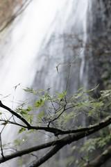 Maple (t.kunikuni) Tags: jp 茨城県 茨城 いばらき イバラキ 久慈郡 久慈 くじ クジ 大子町 大子 だいご ダイゴ 月待の滝 つきまちのたき ツキマチノタキ 滝 紅葉 もみじ モミジ japan ibarakiken ibaraki kujigun kuji daigomachi daigo tsukimachifalls tsukimachinotaki falls maple waterfall