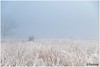 a touch of frost (HP019904) (Hetwie) Tags: natuur frost ijs heather nachtvorst ice zonsopkomst kou rijp nature sunrise ochtend strabrechtseheide strabrecht frozen vorst heide lierop noordbrabant nederland