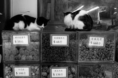 The Cats Guard (Job Homeless) Tags: people hongkong x10 fujifilm streetsnap streetphotography blackandwhite monochorme urban city cat