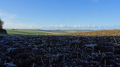 0000260 frosty cereal crop 1116 (4) (sallyclarkephotos) Tags: cereals crop frost