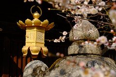 日本 京都奈良5日遊 Koyto&Nara JAPAN_20160225_289 (PS612) Tags: 日本 京都府 北野天滿宮 kitanotenmangushrine sagano kyoto japan spring fujifilmxt10