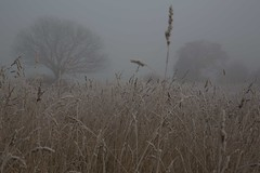 Fade to Grey (Ged Slaughter Photography) Tags: fadetogrey field grass grasses mist misty fog foggy trees tree landscape gedslaughter nature wintery cold icy frozen muted pastel