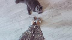 21.11.2016 (Fregoli Cotard) Tags: cat tomcat greycat greykitty greymouse shoes greyshoes mouseshoes indoors britishlonghair britishcat cutekitty scaredkitty cute freckols dailyjournal dailyphoto dailyphotograph daily 366 366daily 366dailyproject 366days 366dailyphoto 366dailyjournal 366project 366photoproject 366photos photographicaljournal photojournal photodiary everydayphoto everydayphotography everydayjournal aphotoeveryday 326366 326of366